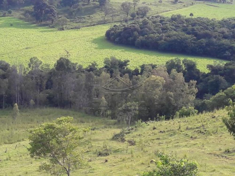 Comprar Terreno / Chácara em Ouro Verde do Oeste apenas R$ 280.000,00 - Foto 10
