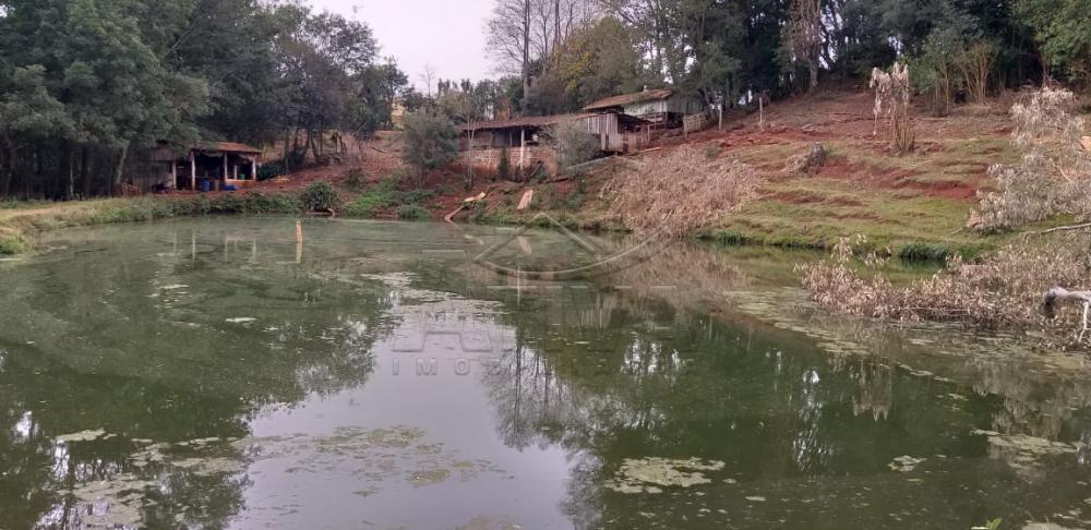 Comprar Rural / Chácara sem Casa em Toledo apenas R$ 750.000,00 - Foto 14