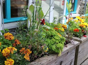 Plantas que repelem insetos naturalmente (para o jardim e dentro de casa)