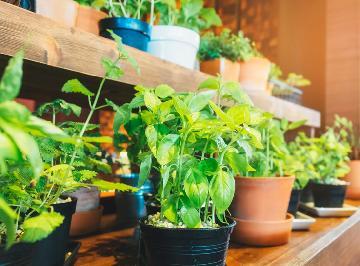 Mini horta para casas e apartamentos